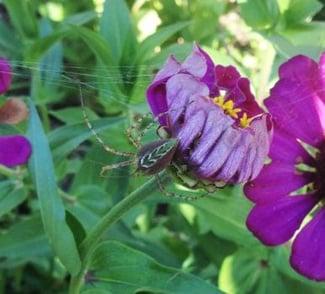spider, spiders, spider pest control