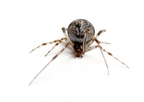 house spider, spiders, spider pest control