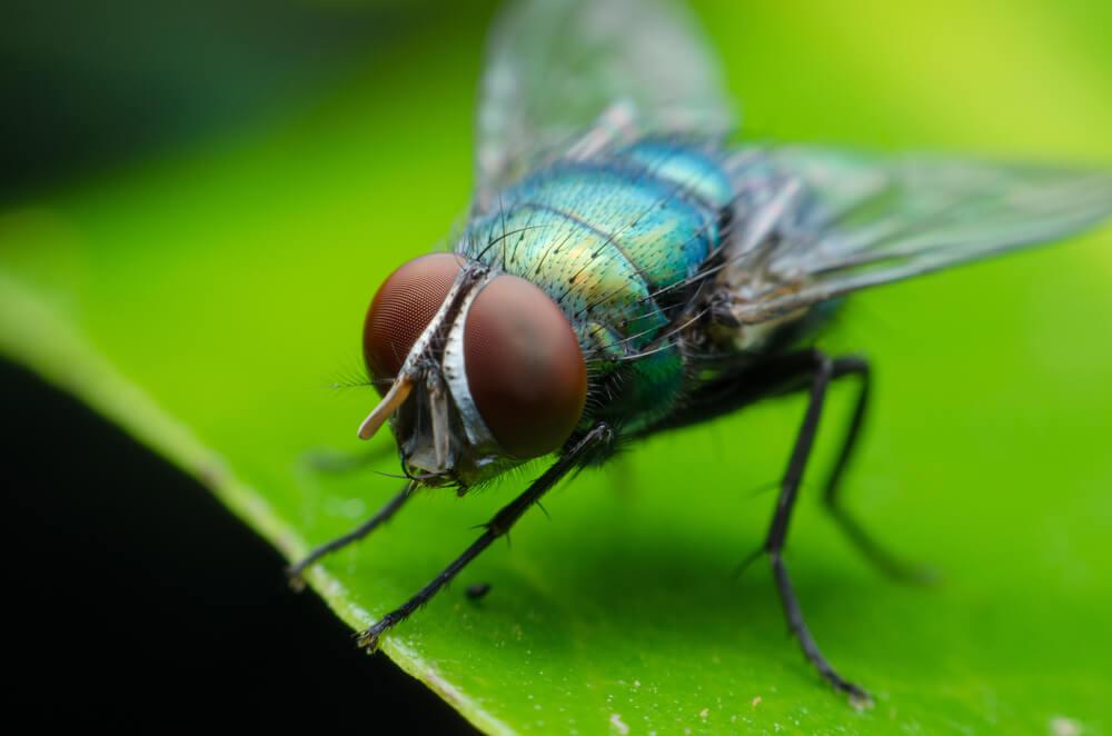Pest Control The Woodlands Tx