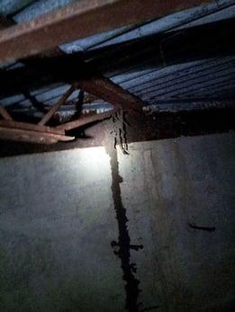 Termite Tunnel, Termite Control