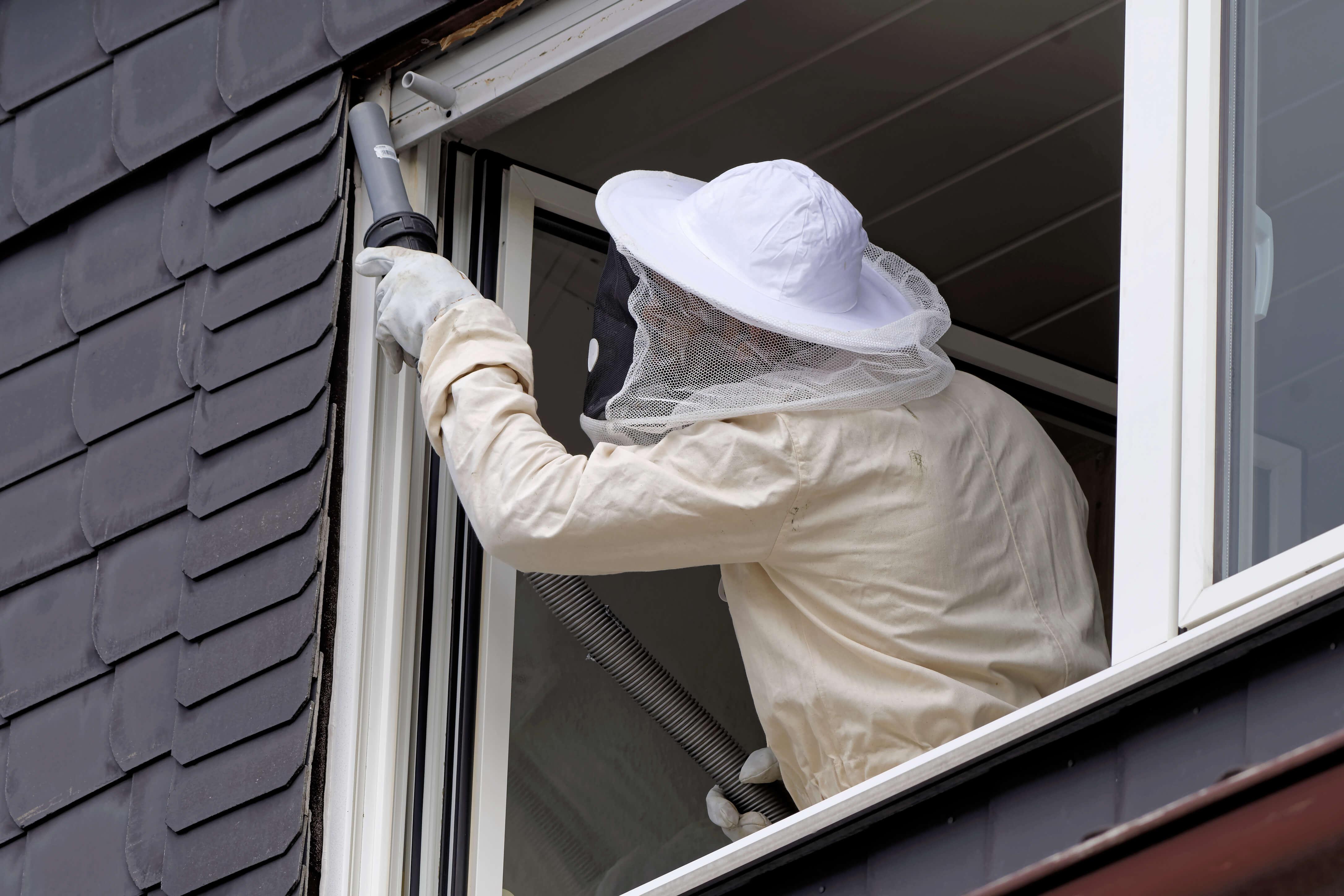 Removing Hornet Nest