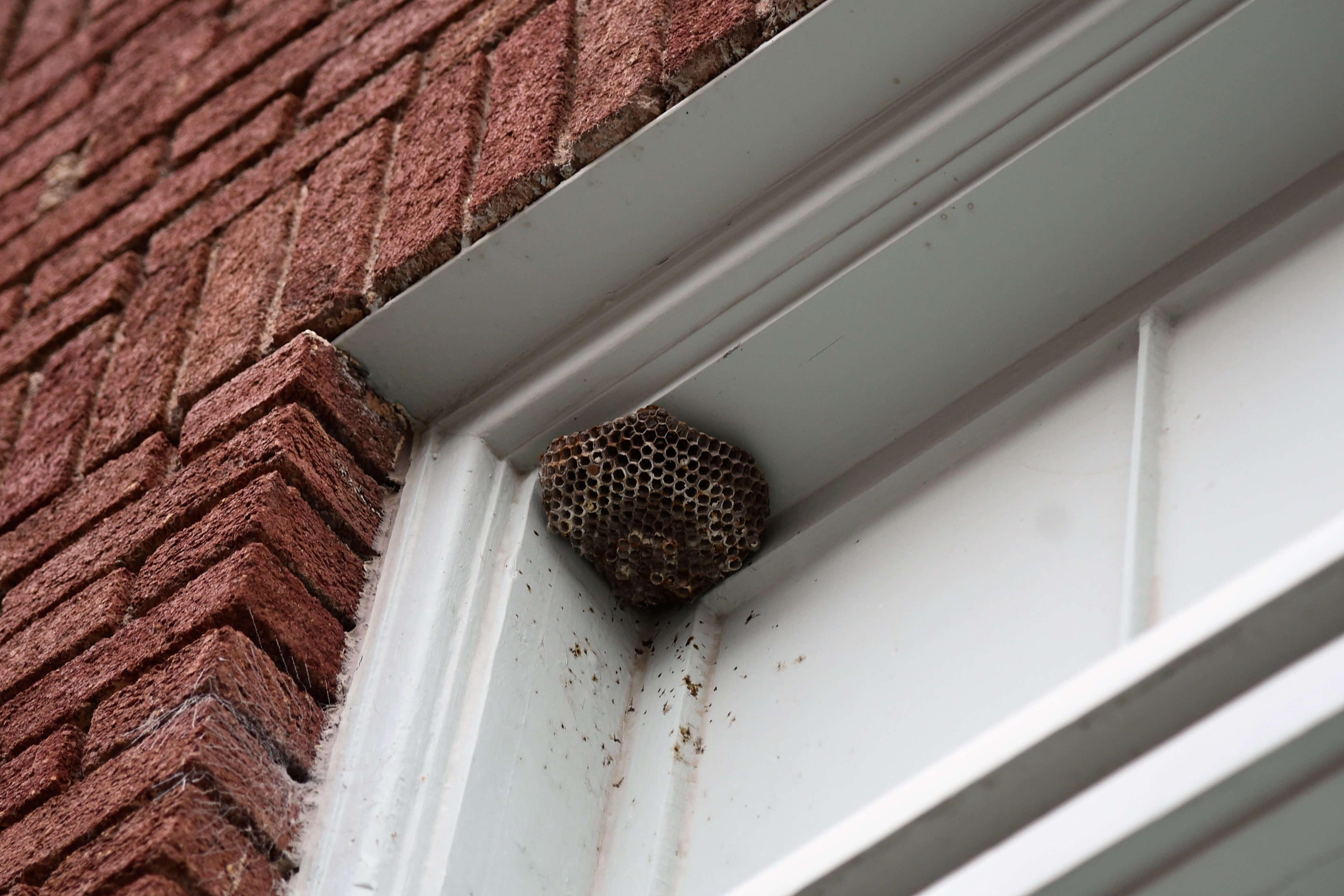 Wasp Nest In Window Frame (1)