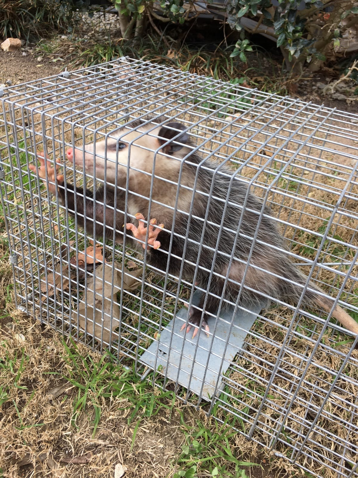 Animal Trapping and Exclusion