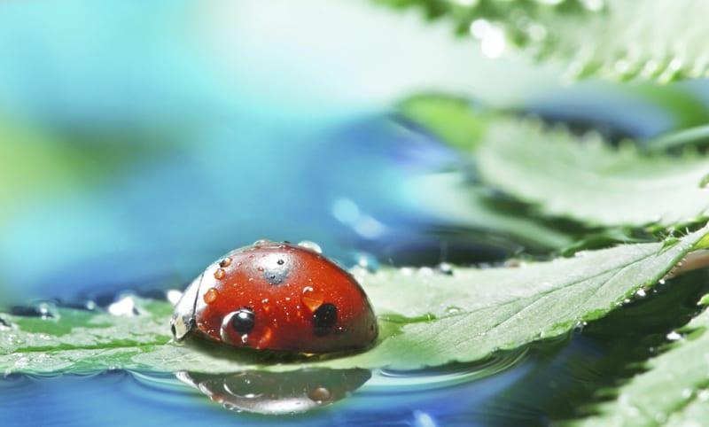 istock_sh_ladybug_sm