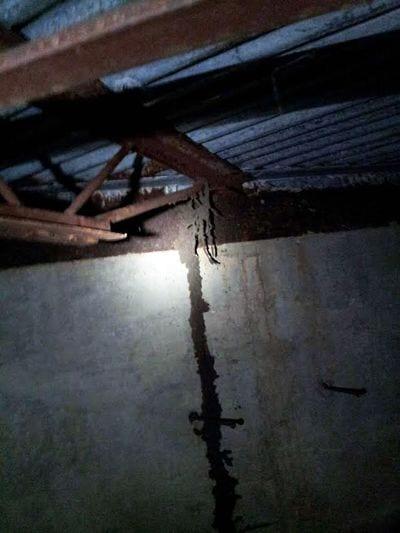 keller_termites_sm__12-col